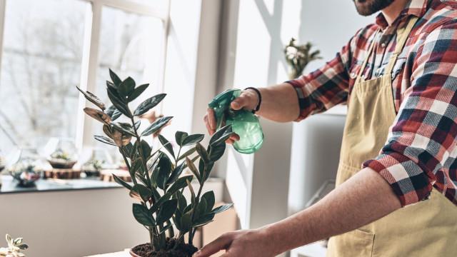 Há quem regue as plantas com água com gás… mas porquê?