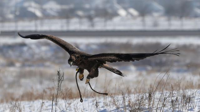 Problemas financeiros levam clube dinamarquês a vender... a águia