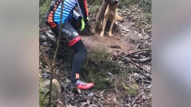 Ciclistas encontram cadela presa no mato. Uma história com final feliz