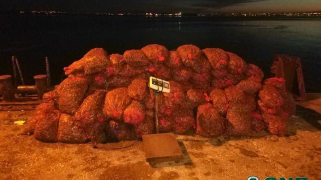 Mulher apanhada com 3,5 toneladas de amêijoa em Alcochete