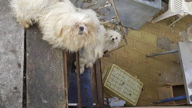 Resgatados 21 cães em situação de maus-tratos de casa de idosa no Brasil