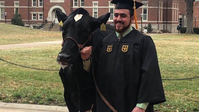 A estrela da cerimónia de graduação foi uma vaca