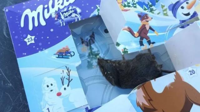 Em vez de chocolate, calendário do advento da Milka trazia... um rato