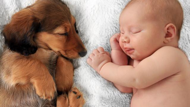 As melhores raças de cães para quem tem bebés