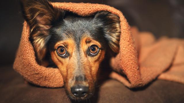 Entenda que gritar com o seu cão piora o comportamento do animal