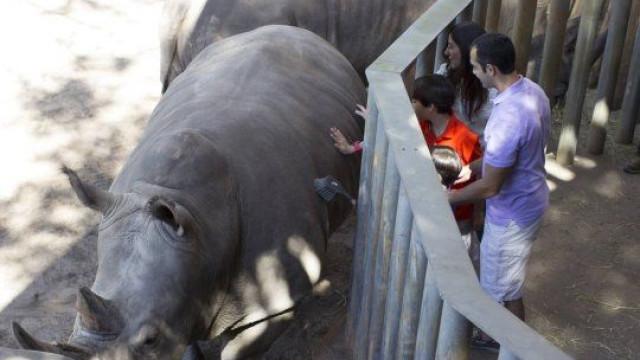 Menina de dois anos ferida após cair em jaula de rinocerontes