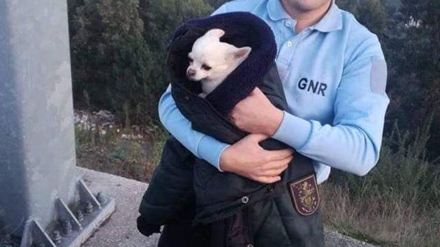 """Lembra-se da cadela encontrada na A42 pela GNR? Eis o """"final feliz"""""""
