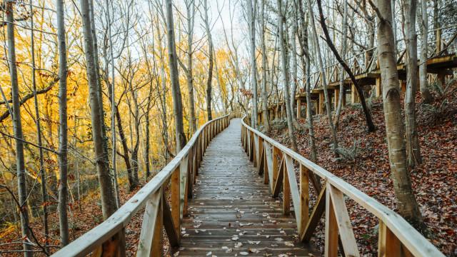 '12 Trilhos 12 Experiências 2019': Venha explorar a natureza