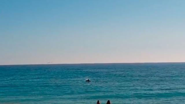 Golfinhos surpreendem com 'visita' a praia de Armação de Pêra