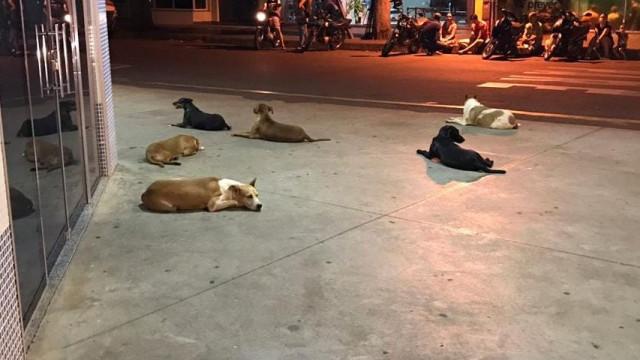 Após dono sem-abrigo ter sofrido AVC, cães acompanham-no até hospital