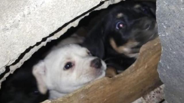 Cachorros presos em infraestrutura de betão resgatados na Madeira