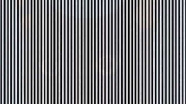 Ilusão de ótica: Consegue encontrar o animal escondido na imagem?