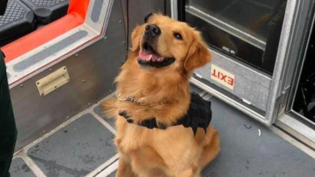 Cão polícia fica sob o efeito de ecstasy ao apanhar traficante em festa