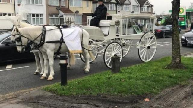 Carroça e coroas de flores. Dona gasta quatro mil euros no funeral do cão