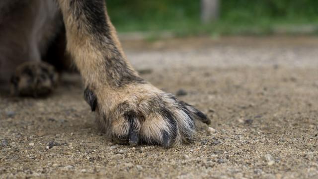 Revolta e indignação com morte de cão abatido a tiro