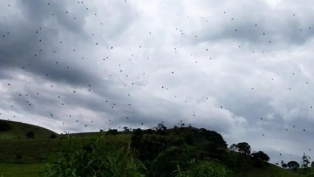 Fenómeno 'chuva de aranhas' filmado no Brasil