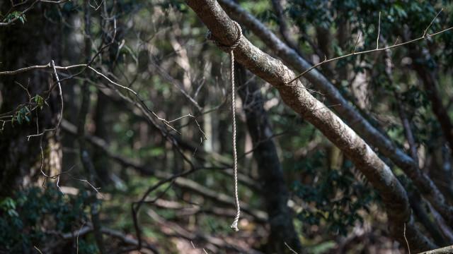 Arrepiante: A assustadora floresta que esconde uma história negra