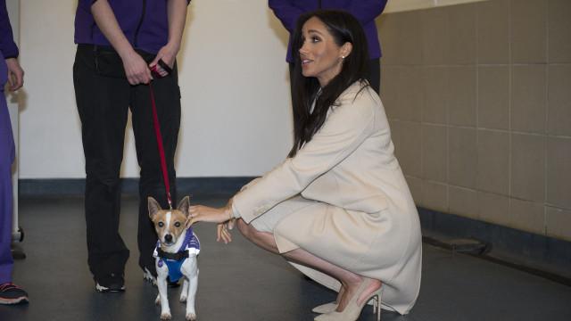 Meghan Markle brilha em evento ao lado de amigos de quatro patas