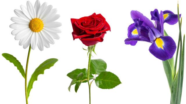 Estas são as flores ideais para cada ocasião