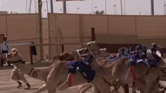 Plantel do PSG competiu em corrida de camelos no Qatar