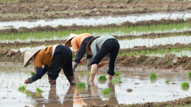 Camboja condena medidas sobre o arroz impostas pela UE