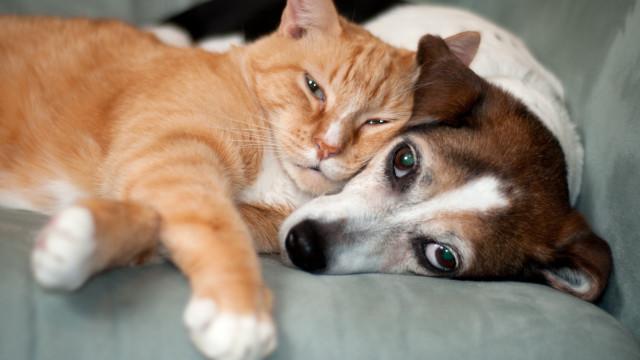Descubra os segredos de uma alimentação equilibrada para cães e gatos