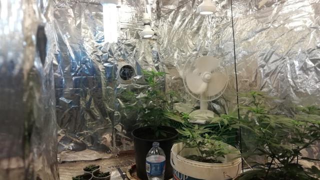 Homem detido a levantar encomenda de sementes de canábis nos CTT