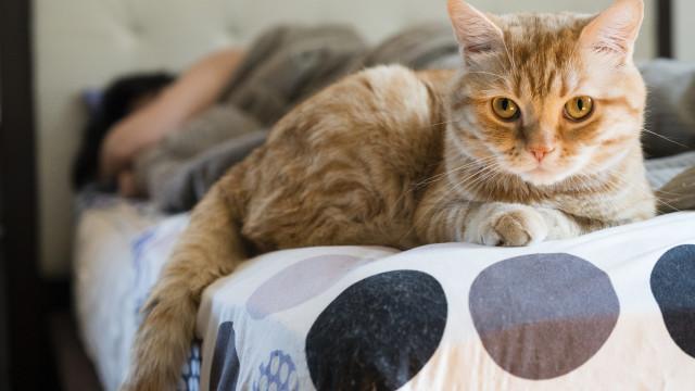 Oito coisas que provavelmente pensa que o seu gato gosta, só que não