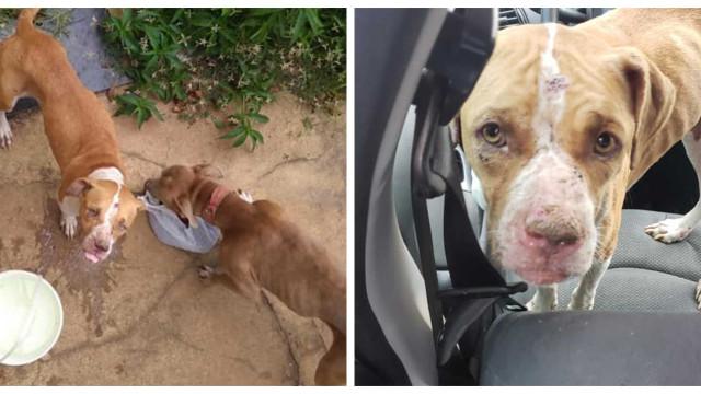 Cães ficaram fechados em casa durante 36 dias sem água nem comida