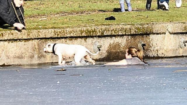 Mulher atira-se a lago gelado para salvar cão