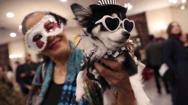 Em Nova Iorque, os cães também tiveram direito a desfile de moda