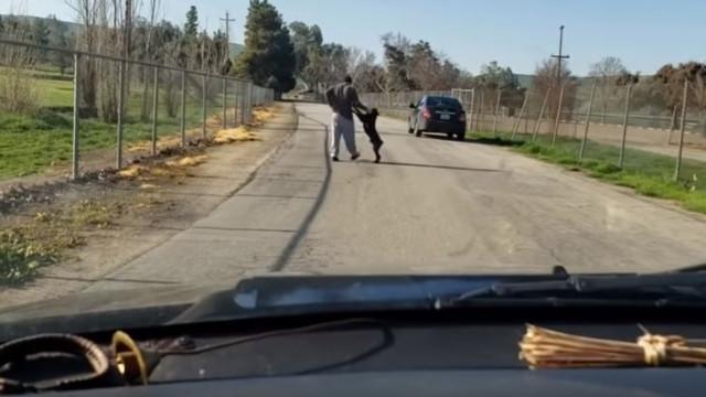 Cão desesperado tenta entrar em carro de dono que o abandonou