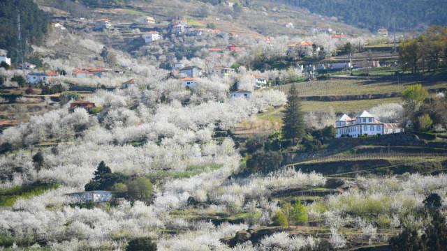 Resende promove visitas guiadas pela Rota das Cerejeiras em Flor