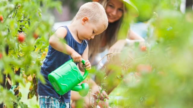 O herbicida mais vendido em Portugal aumenta risco de linfoma em 46%