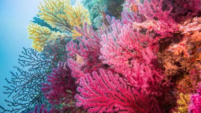 Estudo sugere que filtros UV em cosméticos não impactam recifes de corais