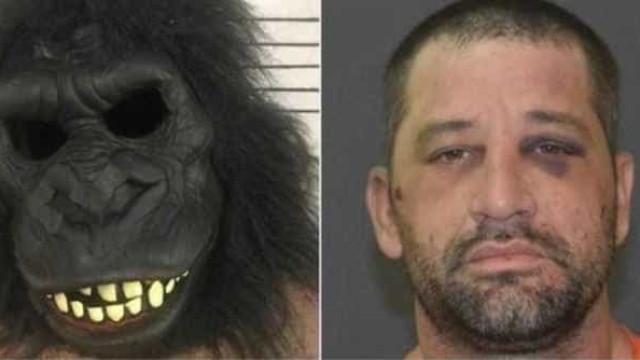 Homem com fato de gorila invade casa e esconde-se debaixo da cama nos EUA