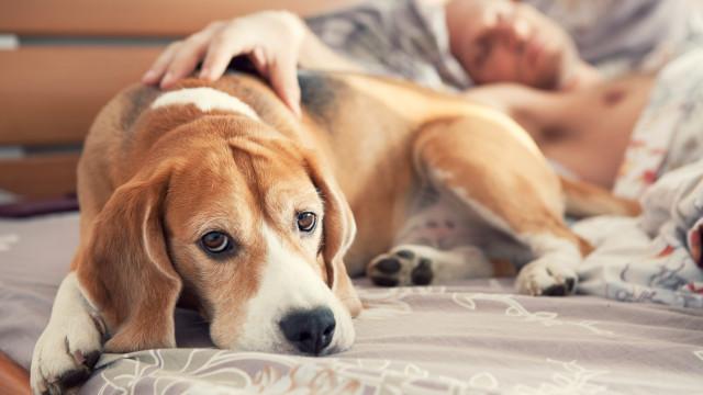 Cinco doenças que os humanos e animais de estimação têm em comum