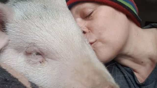 Família em risco de perder a casa depois de salvar porco de abate