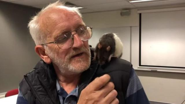 Sem-abrigo australiano e ratazana de estimação reunidos pela polícia