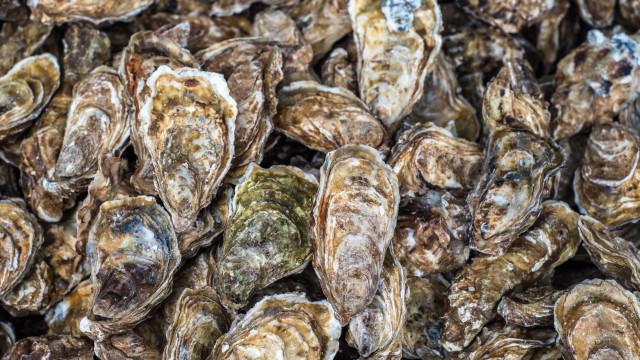 Aveiro: Cascas de ostra da podem substituir rochas ornamentais de coral