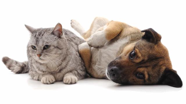 Prefere cães ou gatos? A resposta pode estar no seu ADN