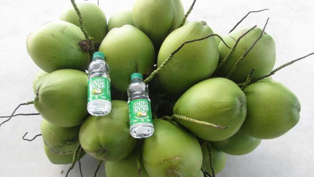 Água de coco do Brasil refresca o verão português