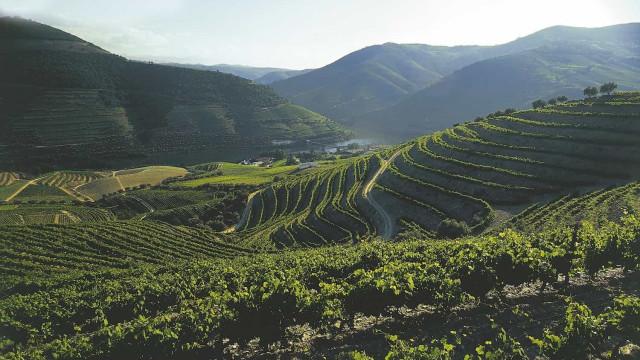 Quinta do Bomfim entre os melhores espaços vinícolas do mundo