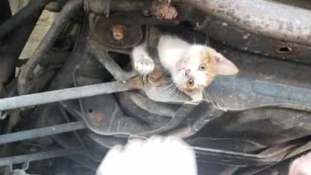 Gatinha bebé resgatada após viajar 48 quilómetros presa debaixo de carro