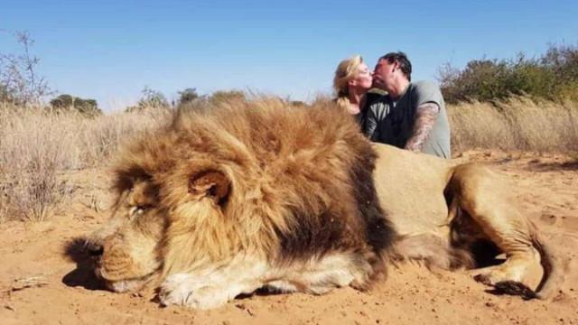 Fotografia 'romântica' de casal atrás de leão morto está a gerar polémica