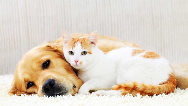 Royal Canin oferece até 2 anos de alimento ao gato e cão mais fotogénico