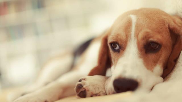 Antes de dormir, o seu cão também fica preocupado com os problemas do dia