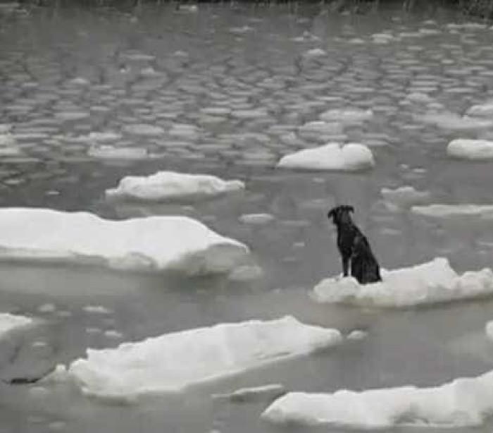 Cão à deriva no mar salvo por marinheiros