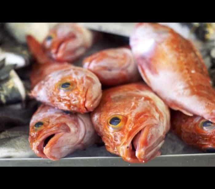 O melhor peixe do mundo vem de Portugal. Este vídeo diz porquê