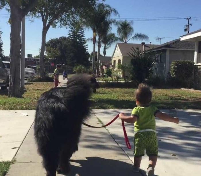 Quem passeia quem, o cão ou o bebé?
